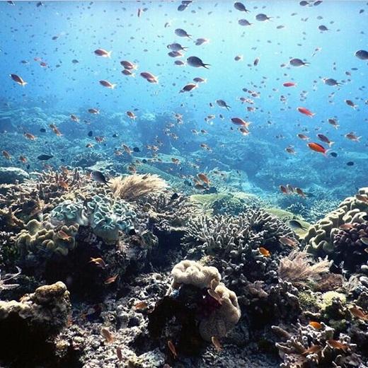 Một thế giới trù phú và đa dạng dưới đáy biển.