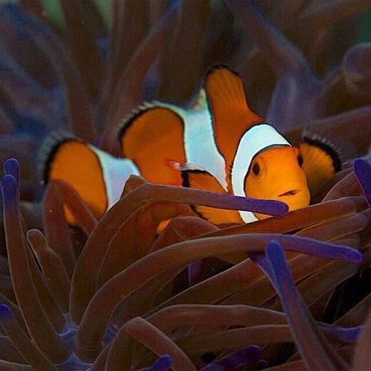 Chú cá Nemo cũng đến đây chơi chăng?