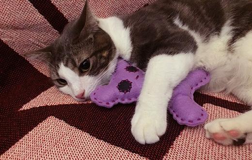 Và thế là bạn đã có ngay một món đồ chơi nhồi bông mà các chú cún hay mèo con rất thích đấy nhé.