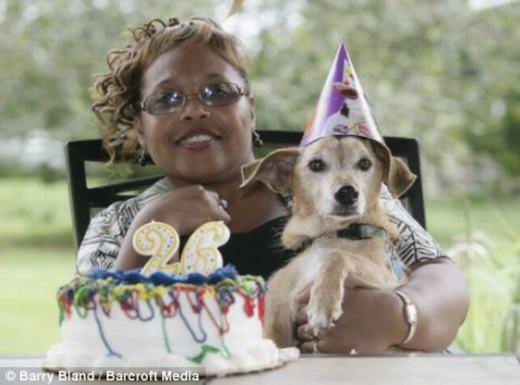Chú chó sống thọ nhất thế giới là 29 tuổi.