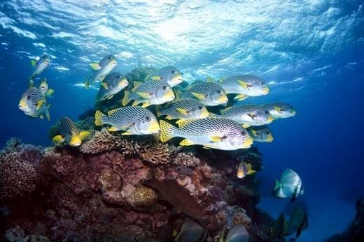 Nếu bạn chú ý kĩ thì trong phim có một số đoạn nhắc đến đất nước Úc đấy. Bối cảnh của phim hoạt hình Finding Nemo được lấy cảm hứng từ rạn san hô đẹp nhất thế giới Great Barrier ở Queensland, Úc.