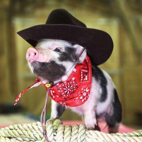 """Chàng """"cao bồi viễn Tây"""" với mũ rộng vành, khăn choàng và dây thừng."""