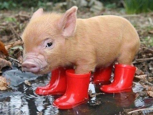 Ủng không thấm nước cho mùa mưa
