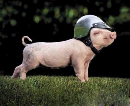 Thời trang mũ bảo hiểm: 'An toàn là chính, sợ công an giao thông là... mười!'.