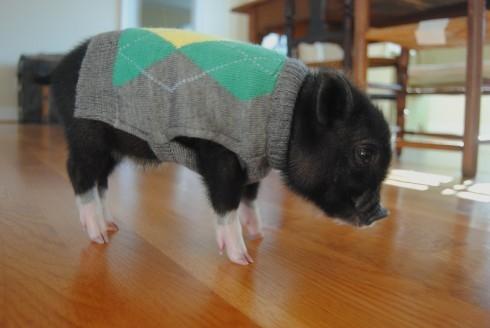 Áo len trang nhã cho ngày đông lạnh lẽo.