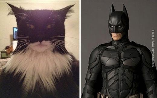 Nếu cần diễn viên đóng thế trong các cảnh phim hành động, hẳn Batman sẽ chọn lựa chú mèo này.