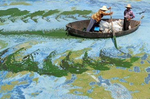 Những người đánh cá đang chèo thuyền trên mặt hồ đầy tảo ở Trung Quốc.