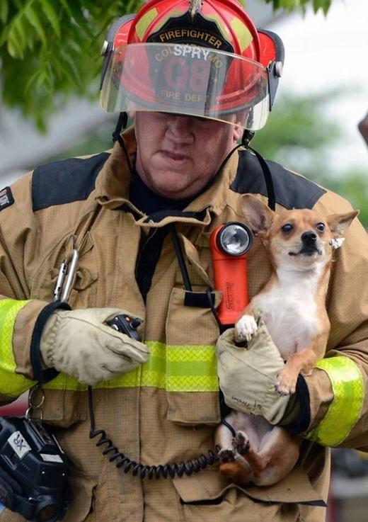 Một đám cháy xảy ra tại Columbia, Missouri, Mỹ, và chú chó có tên Little Bulletnày vừa thoát khỏi tử thần, an toàn trong vòng tay của một người lính cứu hỏa.