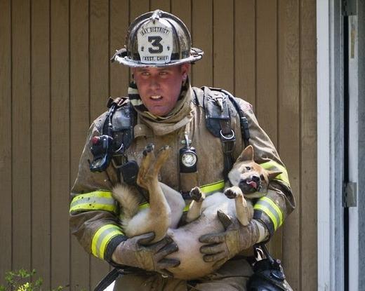 Một chú chó đã được cứu sống khỏi đám cháy và có vẻ như người lính cứu hỏa phải rất vất vả vật lộn với ngọn lửa.