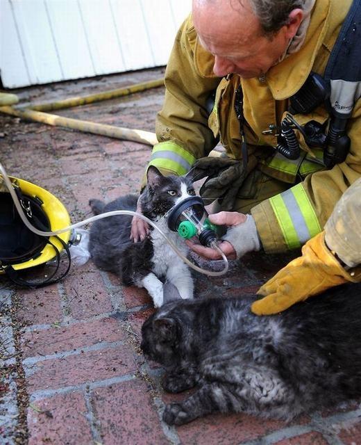 Hai chú mèo đang được hỗ trợ thở oxy sau khi bị ngạt trong đám cháy. Hình ảnh cảm động này đã khiến nhiều người trên thế giới, đặc biệt là những ai yêu động vật đều phải rơi nước mắt.