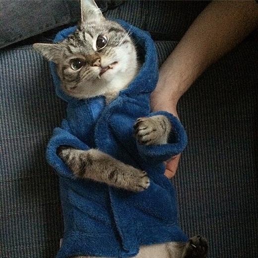 Cô chủKaetcũng chia sẻ rằng khi nhận nuôi chú mèo này,cô cũng không có một thông tin cụ thể về hình dáng bên ngoài củaLokicả.