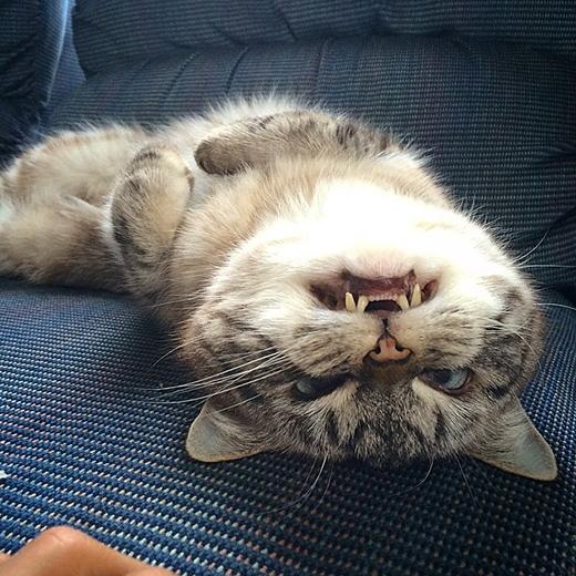 Lokicũng rất thích sử dụng 2 chiếc răng nanh của mình để đe dọa người khác.
