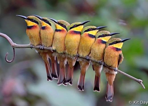 Một gia đình chim đầy màu sắc