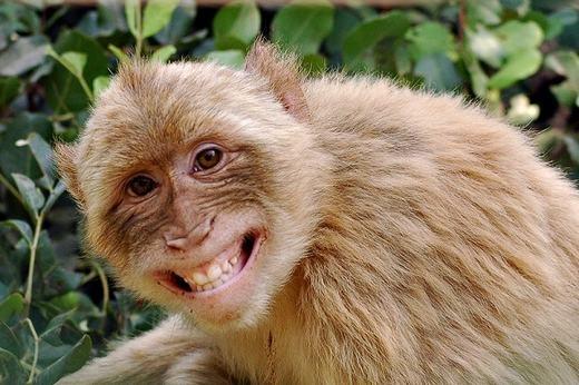 """Chỉ có con người mới có khả năng cười một cách đúng nghĩa. Trong khi đó, các loài động vật khác chỉ có hành động """"banh hàm""""chứ không hề có cảm xúc vui vẻ."""