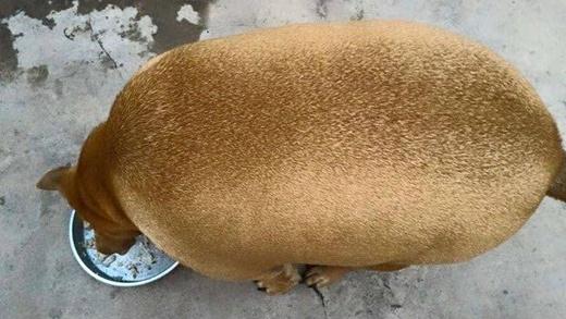 Chú chó mới được chia sẻ gần đây trên mạng xã hội.