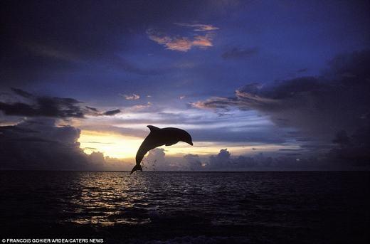 Khung cảnh đẹp say lòng người của chiều tà trên đại dương.