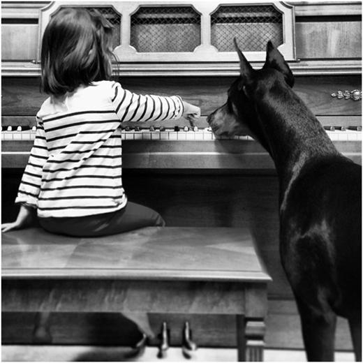 Ngay cả khi Siena chơi đàn cũng không thể thiếu sự góp mặt của chú chó Buddha.
