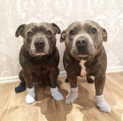 Ai lại cầm lòng được trước ánh mắt năn nỉ ỉ ôi của hai em chó này cơ chứ?
