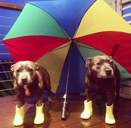 Cách chúng tôi 'sống sót' qua những ngày mưa...
