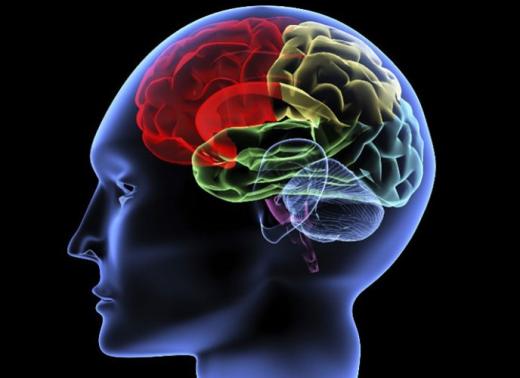 Người ta nói rằng trung bình chúng ta chỉ sử dụng 10% bộ não cho các công việc hàng ngày. Tuy nhiên, mỗi phần trong não đều có chức năng riêng và đều làm việc.
