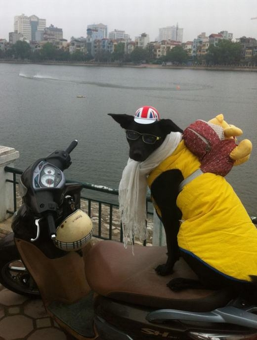 Những chú chó có 'gu' ăn mặc cực đỉnh