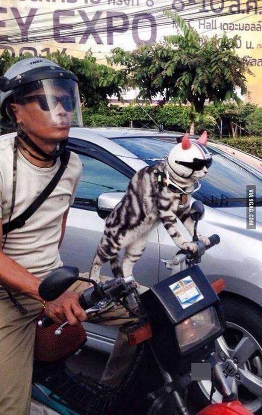 Ta là tay đua mèo đây!