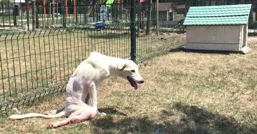 Lawson là một chú chó hoang. Vào thời điểm trước tai nạn, chú rất đói và muốn kiếm thức ăn thừa từ một cửa hàng gần đó.