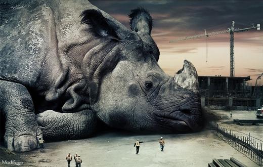 Tê giác 'ngủ gục' giữa đường, gây cản trở thi công trầm trọng!