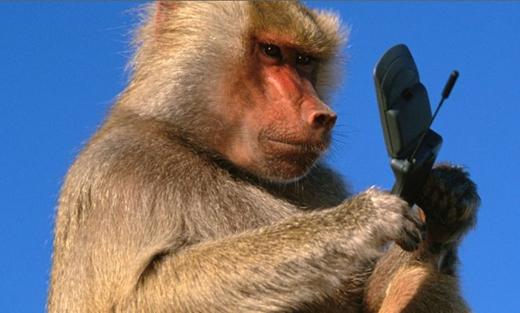 Bị khỉ tấn công (Sở thú Fuzhou, Trung Quốc): Tháng 9/2007, du khách Zheng Dong đang chụp ảnh những con khỉ Assamese thì một con giật được điện thoại của anh và cho vào miệng gặm. Người đàn ông này đã trèo qua hàng rào tới sát chuồng khỉ để cố lấy lại điện thoại. Ba con khỉ đã túm được anh ta và bắt đầu cào, cắn... cho tới khi nhân viên sở thú tới giải cứu. Zheng Dong đã thoát nạn với nhiều vết thương, sau đó còn kiện sở thú và đòi bồi thường một điện thoại mới. Ảnh: Rebelcircus.