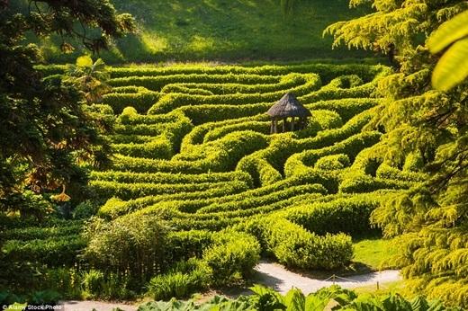 """Mê cung Glendurgan Garden ở Cornwall, Anh thật sự sẽ khiến bạn """"chóng mặt"""" khi phải đi qua ba thung lũng xinh đẹp để đến đích là một cái chòi gỗ nhỏ ở trung tâm.(Ảnh:Internet)"""
