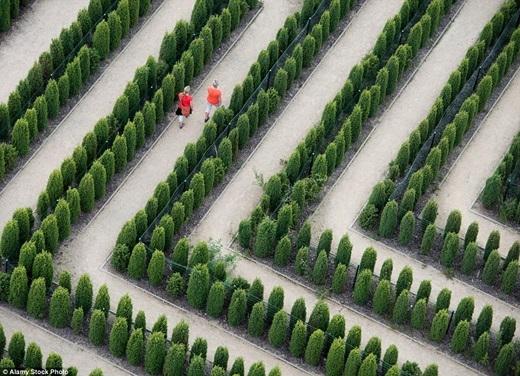 """Mê cung ở công viên giải trí Teichland gần Jaenschwalde, Đức không quá phức tạp để thoát ra nếu bạn """"ngoan ngoãn"""" men theo lối đi.(Ảnh:Internet)"""
