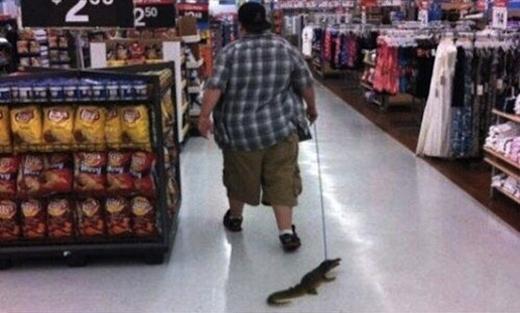 Người đàn ông này đã gây 'sốt' khi dắt chú cá sấu đi vòng quanh siêu thị.