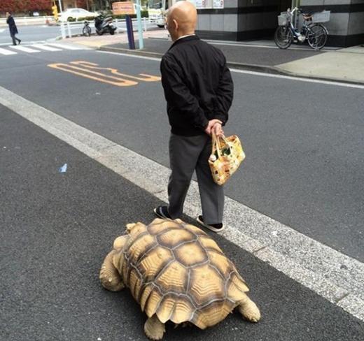 Cụ ông Nhật Bản đã có chú rùa làm bạn đồng hành trên đường đi.