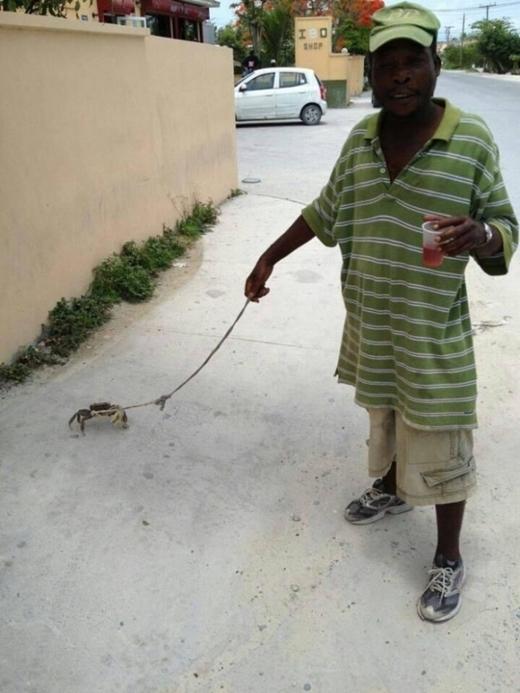 Người đàn ông đi dạo cùng một chú cua, trông rất... sành điệu và độc đáo.