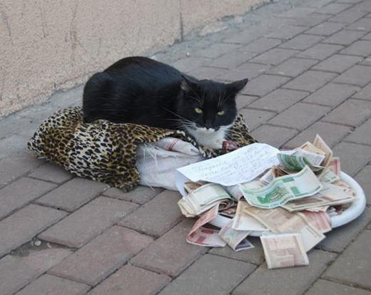'Nhìn gì, chưa thấy mèo ăn xin bao giờ à?'.(Ảnh: Internet)