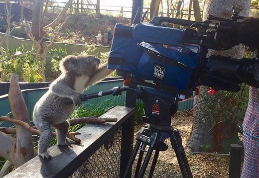 'Cả quay phim nữa nhé!'.(Ảnh: Internet)
