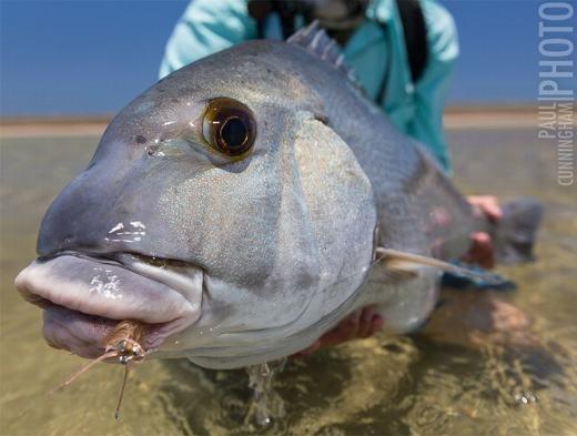 """Nhìn cận cảnh, loài cá này thực sự rất dễ thương, nhưng nó lại là một """"thủy quái"""" đáng sợ. (Ảnh: Internet)"""