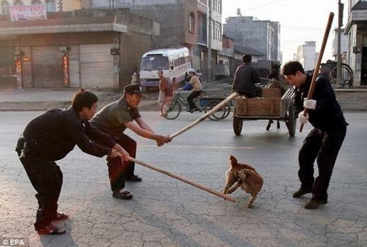 Một cảnh đánh đập chó hoang. (Ảnh: EPA)