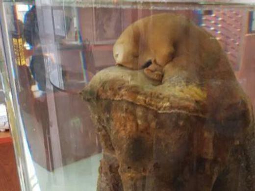 Cây linh chi Thái Tuế khác đang được trưng bày tại bảo tàng linh chi Vũ Hán. (Ảnh: Sohu)