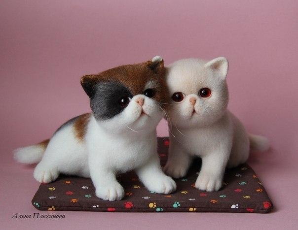 'Xin chào! Chúng mình là những chú mèo bông đáng yêu.'