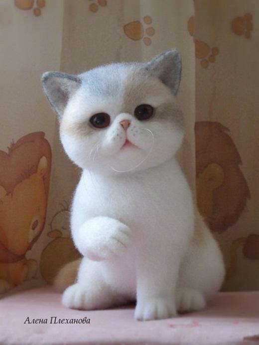 Cận cảnh vẻ đẹp của chú mèo khiến bao trái tim phải 'ngẩn ngơ'.