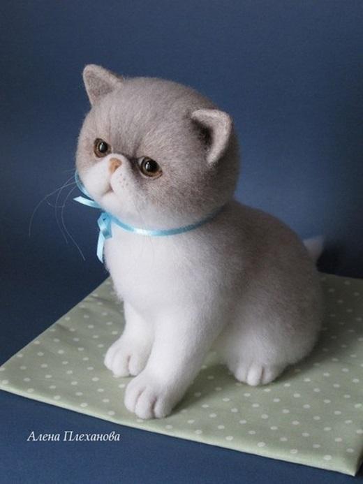 Chắc hẳn ai cũng muốn sở hữu cho mình một chú mèo xinh đẹp như thế này.