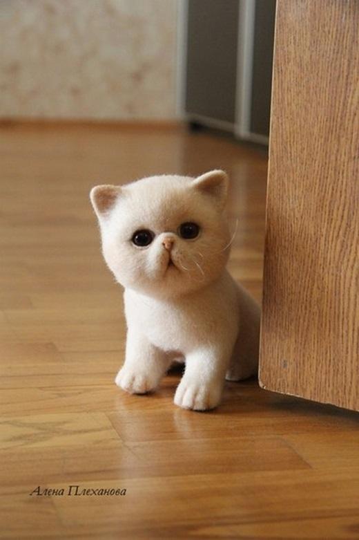 Nếu nhìn thoáng qua bạn sẽ chẳng thể nào biết đây là chú mèo giả.