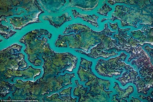 Còn đây là những nhánh sông cực đẹp gần Santa Cruz, California, Mỹđược chụp từ trên cao. (Ảnh: Internet)