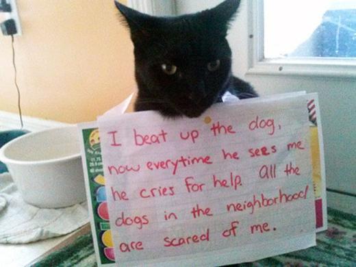 """Bởi vì, đối với loài mèo, bạo lực là để khoe mẽ sức mạnh của mình đối với kẻ địch. (Tạm dịch: """"Tôi đã đánh bại một con chó nên bây giờ bất cứ khi nào hắn thấy tôi thìđều phải khóc lóc van xin tha mạng. Tất cả những con chó trong khu xóm này đều rất sợ tôi..."""")(Ảnh: Internet)"""