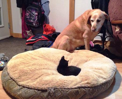 Trong mắt chúng, tất cả đều là thế giới của loài mèo và bạn chỉ đang sống tạm trên đó mà thôi.(Ảnh: Internet)
