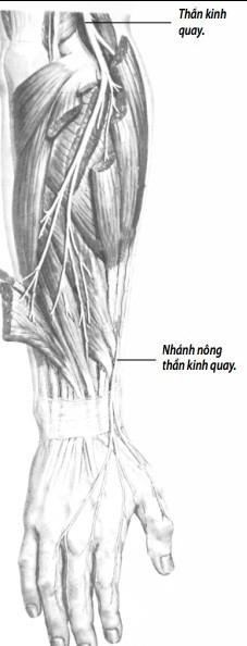 Thần kinh quay dễ bị tổn thương khi chơi vật tay.