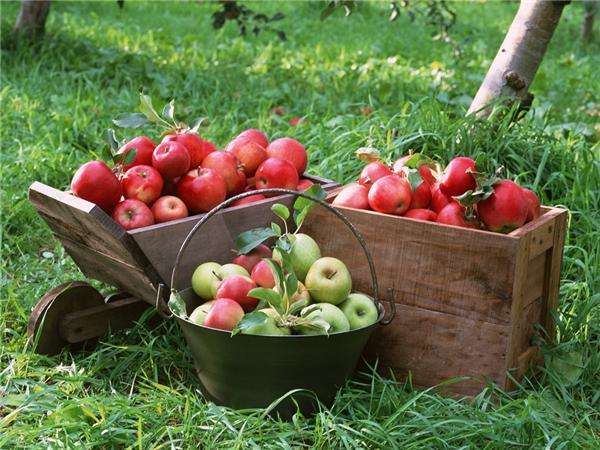 Quả táo diệu kì của