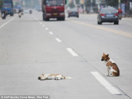 ... chú chó đứng thẫn thờnhìn theo...(Ảnh: Internet)