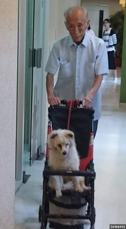 Bật khóc vì cảnh ông già đơn thân cặm cụi bên chú chó sắp chết